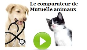 mutuelle chien chat2